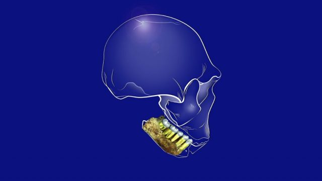 Nothing but the Tooth – What Dental Remains From Homo naledi Can Tell Us